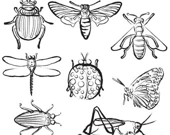 Bug clip art cute. Insects clipart black and white