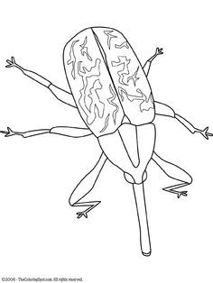 Termite drawing at getdrawings. Bugs clipart boll weevil
