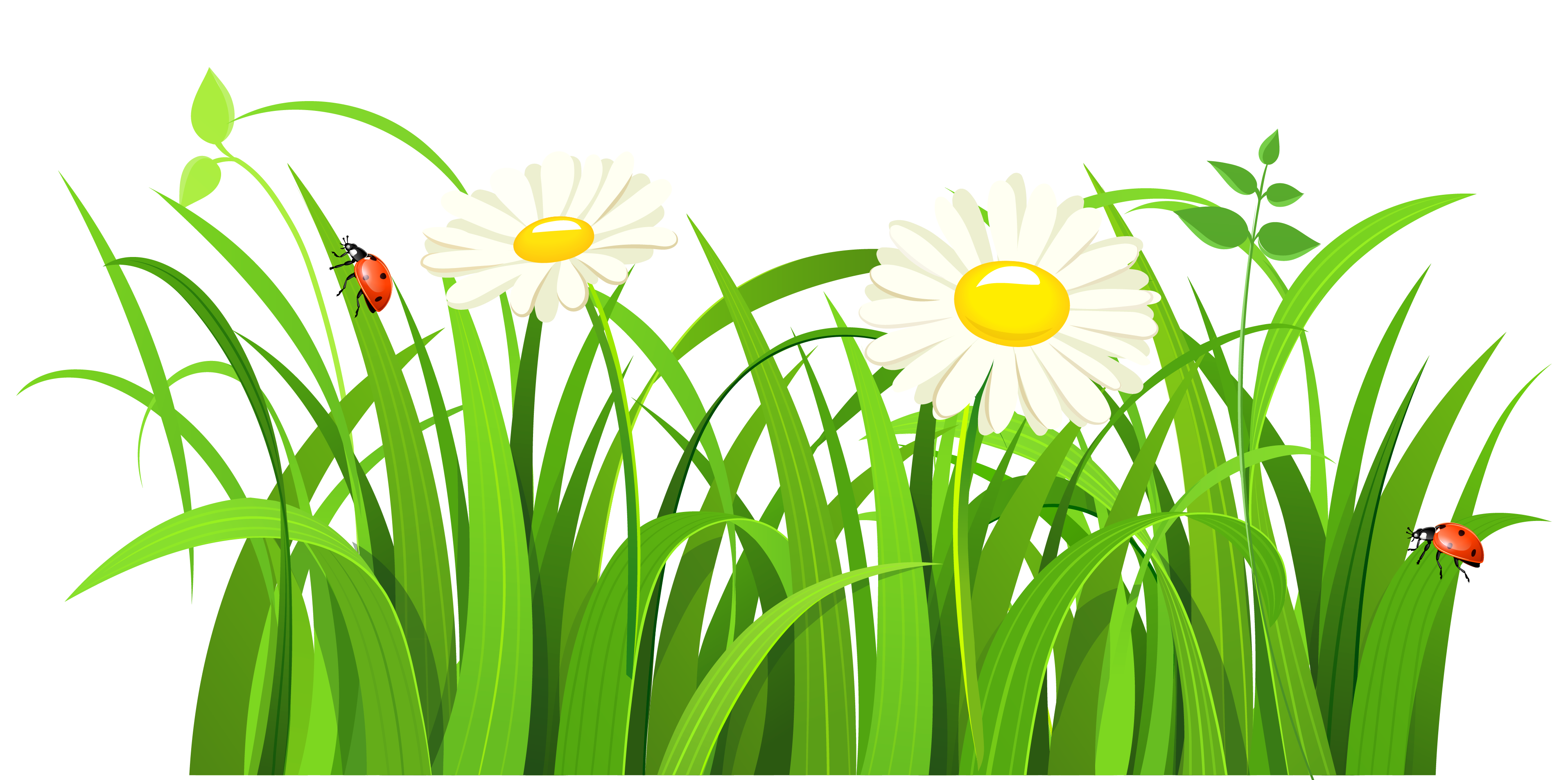 Clipart flower insect. Grass with daisies and