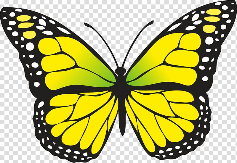 Transparent background png hiclipart. Bugs clipart butterfly