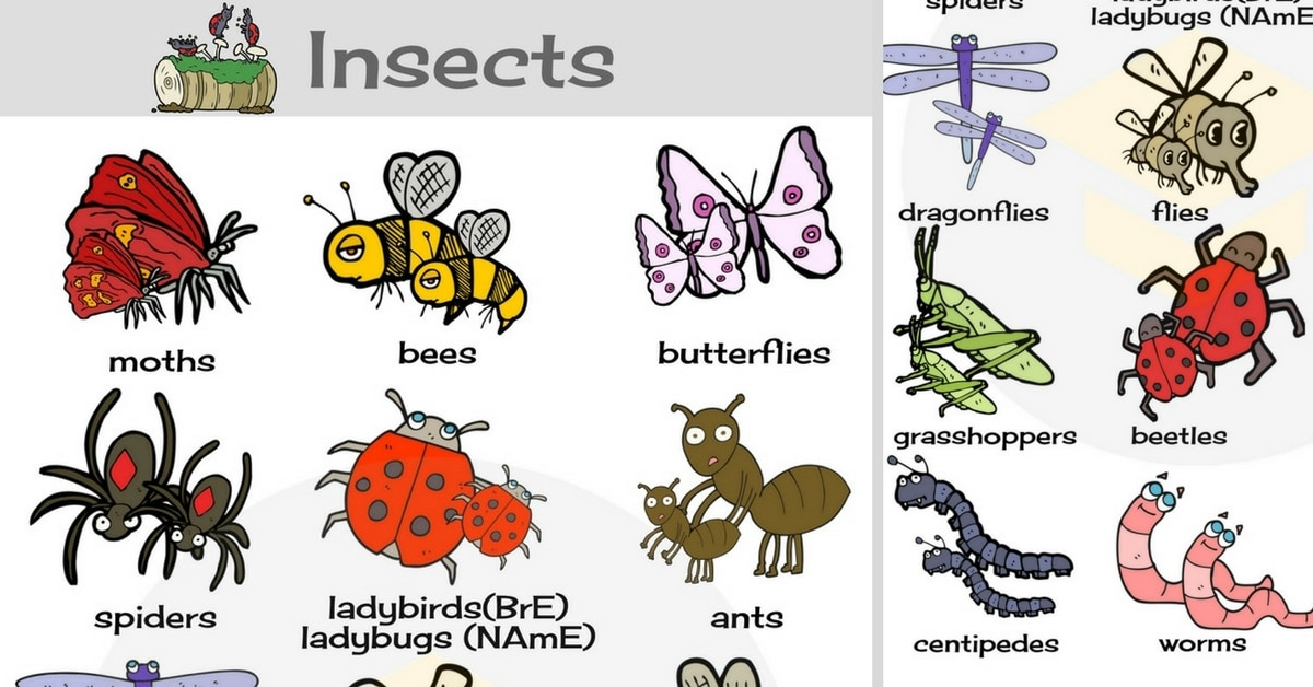 Insects vocabulary in english. Bugs clipart centipede