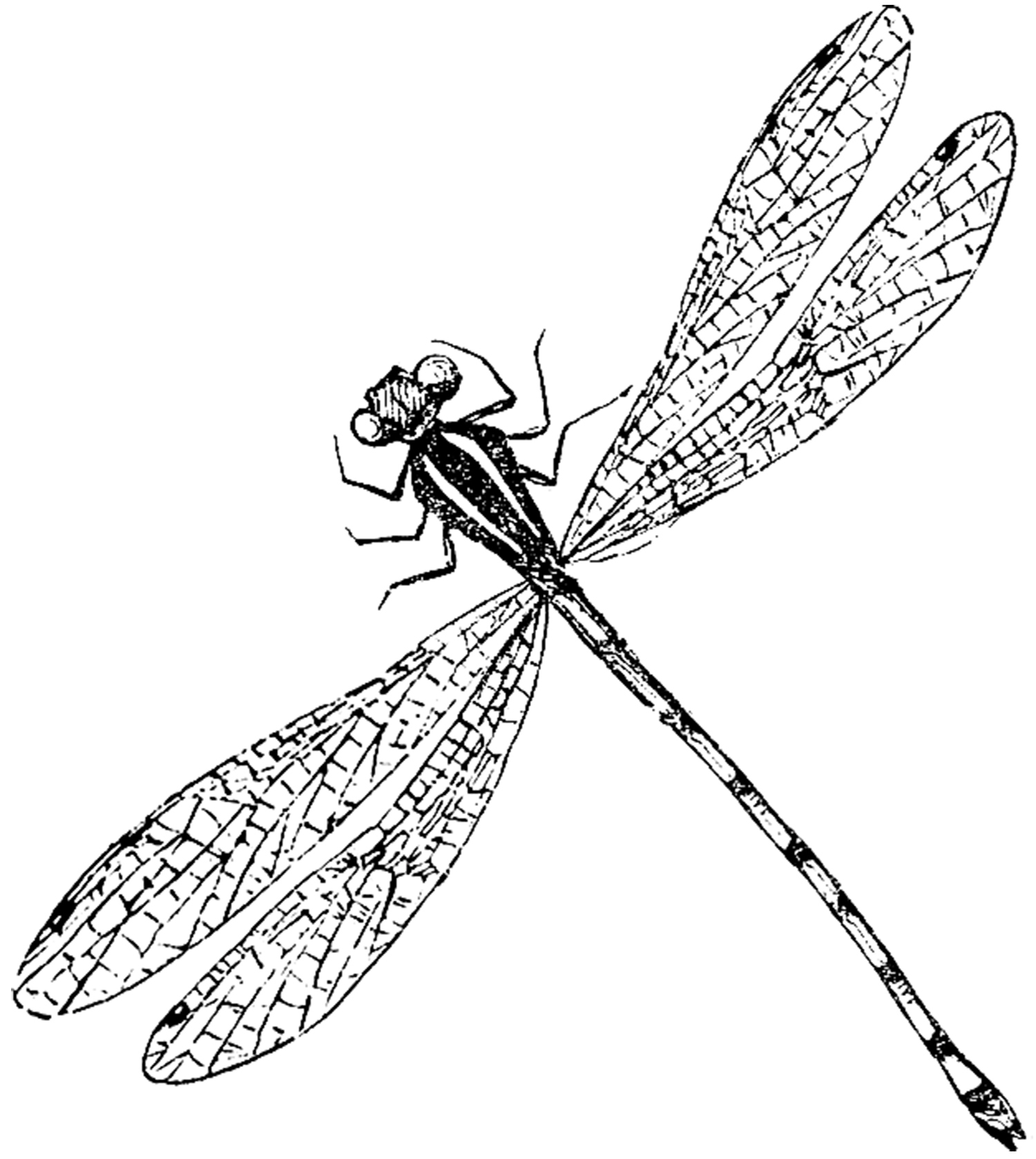 Antique dragonfly image the. Insect clipart thumbi