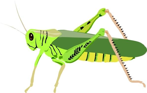 Bugs clipart grass hopper. Grasshopper locust clip art