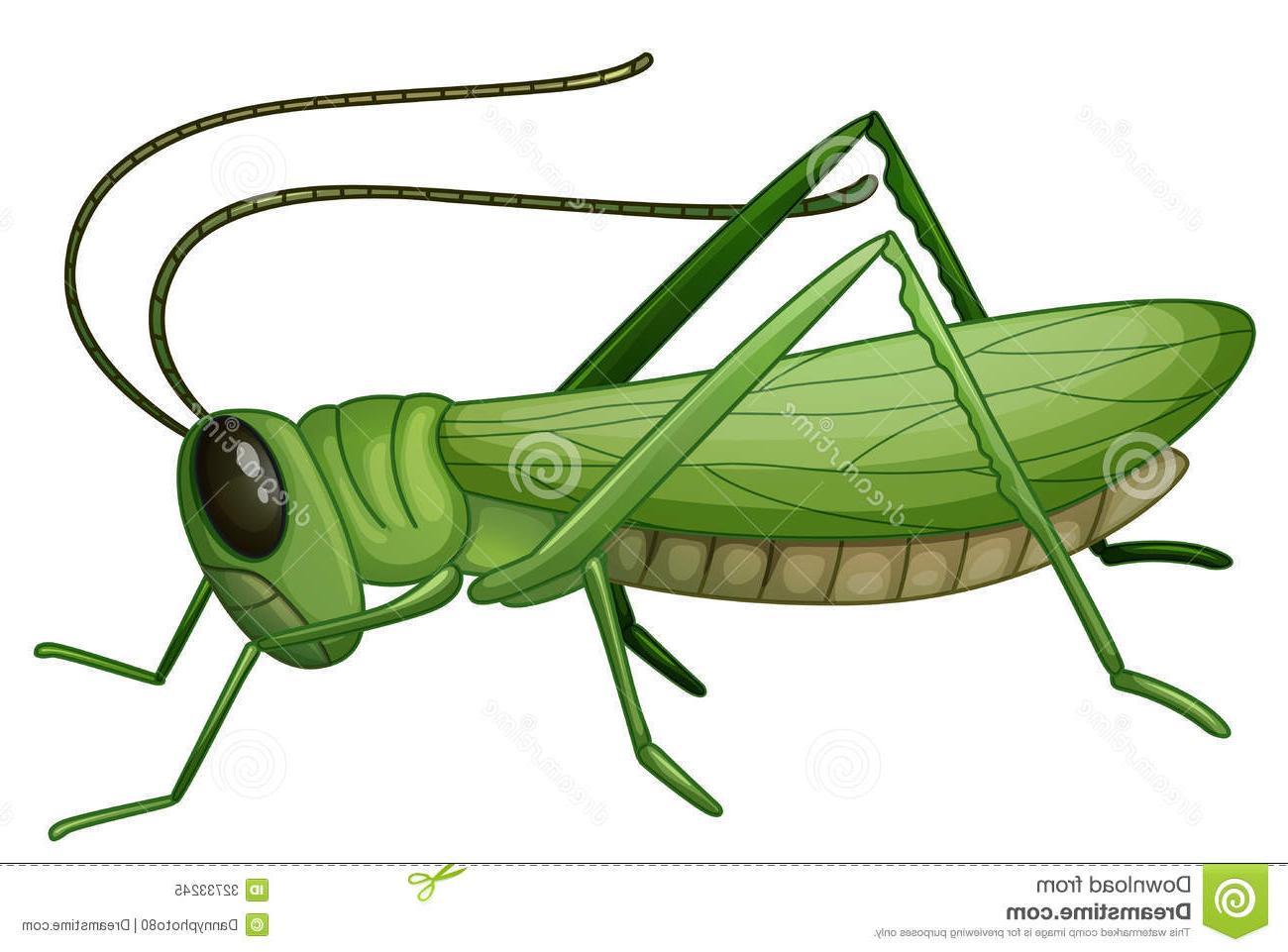 Best grasshopper jump pictures. Bugs clipart grass hopper
