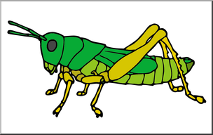Clip art insects color. Grasshopper clipart insect grasshopper