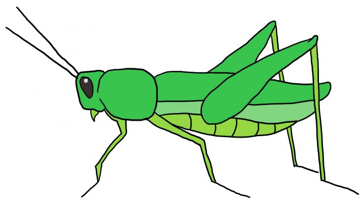 Grasshopper clipart. Drawing for kids at