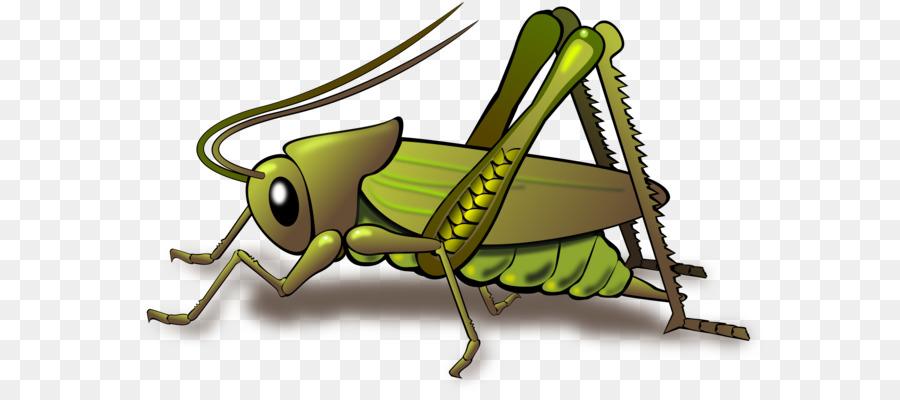 Bugs clipart grass hopper. Insect grasshopper cricket clip