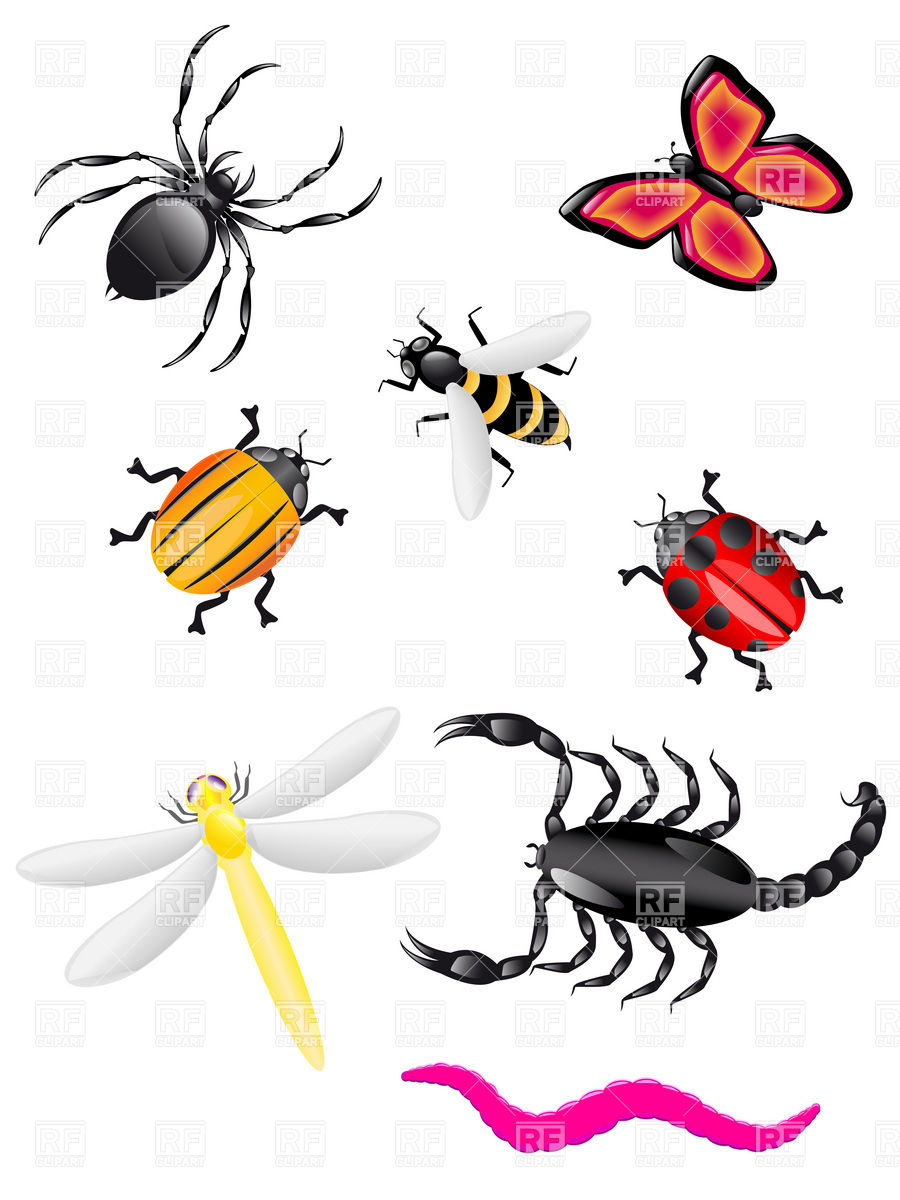 Bugs and kid clipartix. Insects clipart different insect