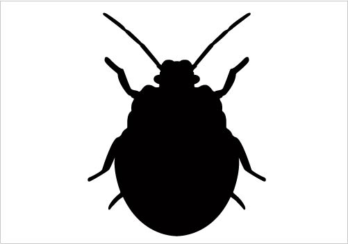 Bugs silhouette at getdrawings. Beetle clipart little bug