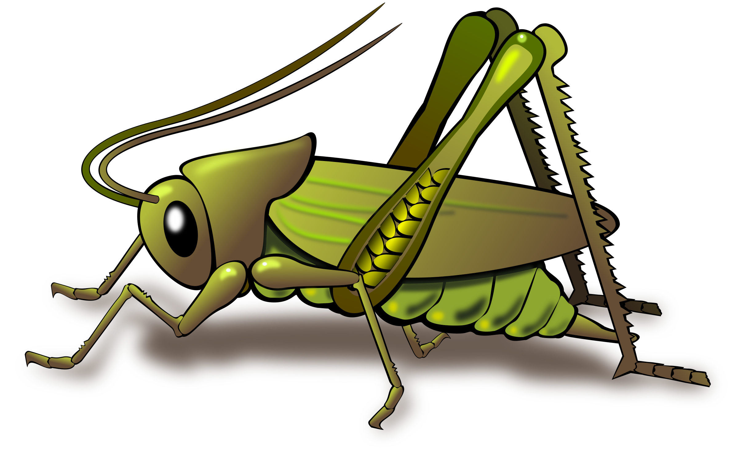 Cricket png transparent images. Name clipart insect