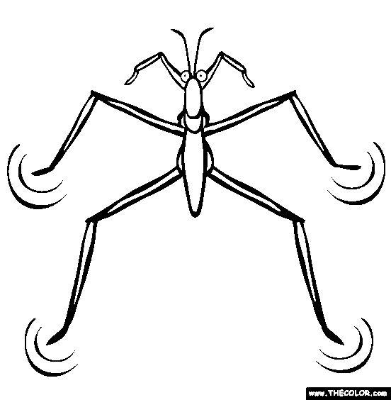 Bugs clipart water beetle.  best good ideas