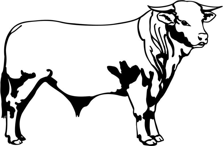 Panda free . Bull clipart black and white