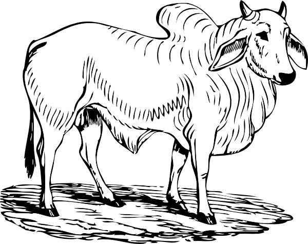 Brahma clip art free. Bull clipart black and white