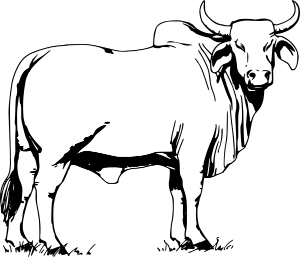 Ox clipart outline. Bull black and white