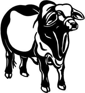 Brahman vinyl decal car. Cattle clipart brahma bull
