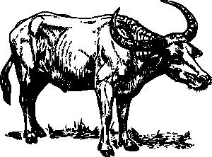 Buffalo clipart bull. Clip art at clker