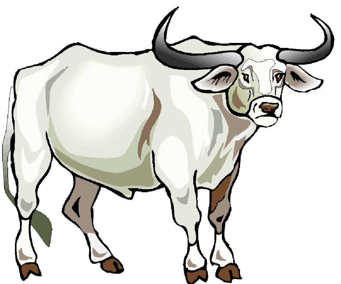 Clip art farm cows. Bull clipart carabao