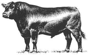 Clip art bull . Cattle clipart angus cattle