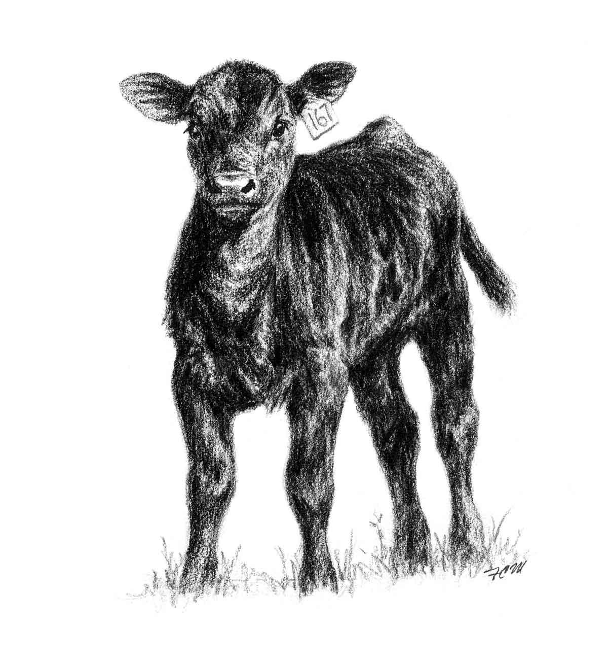 Bull clipart profile. Angus clip art calf