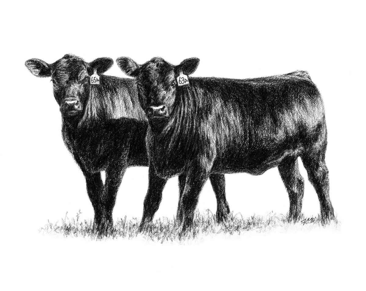 Bull clipart profile. Show steer graphics heifers