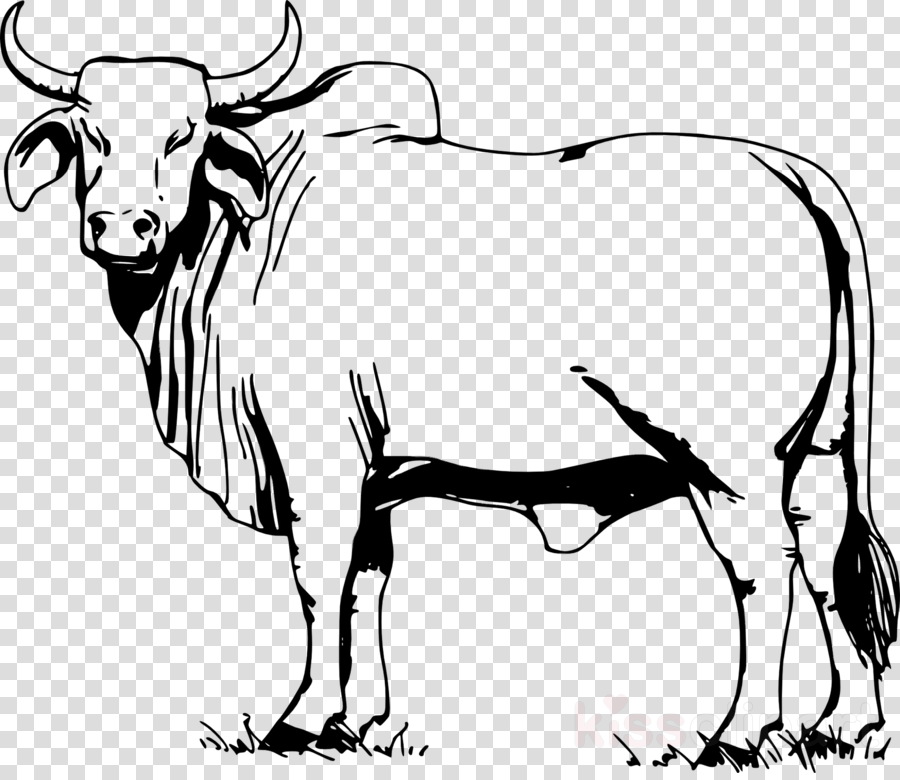 Drawing of family milk. Ox clipart zebu