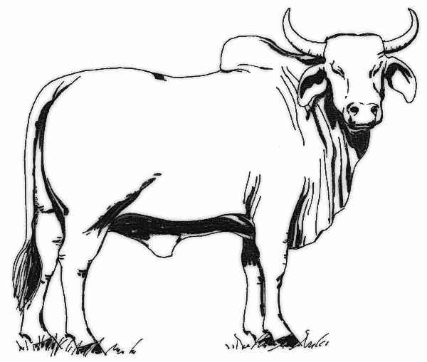 Gallery for free black. Cow clipart bull