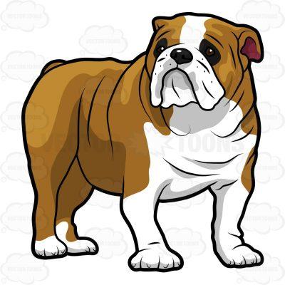 English basketball free on. Bulldog clipart baby bulldog