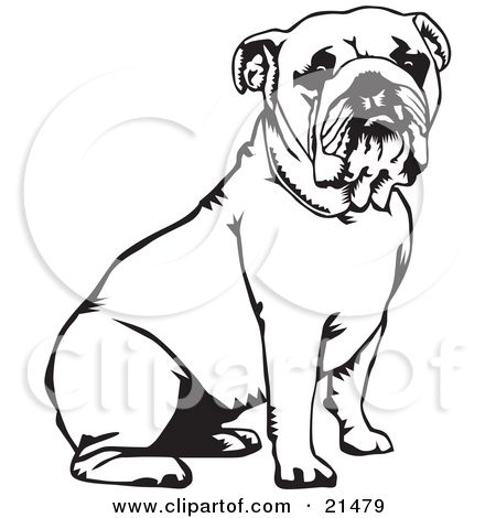 Pages illustration of a. Bulldog clipart coloring page