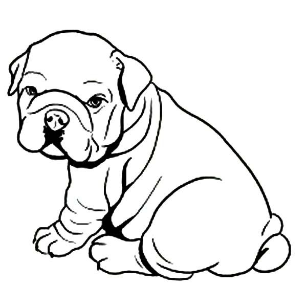 Fat like towel pages. Bulldog clipart coloring page