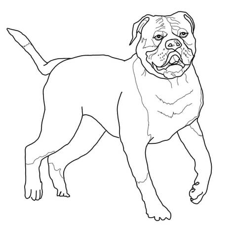 American free printable pages. Bulldog clipart coloring page