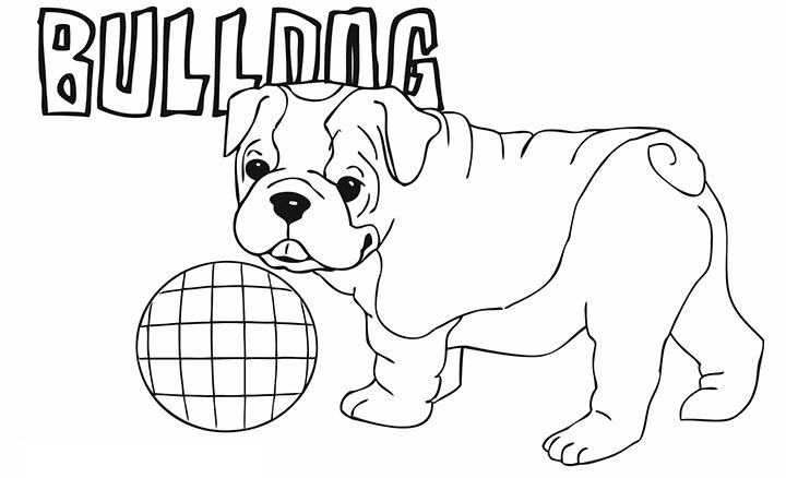 Pictures to color french. Bulldog clipart coloring page