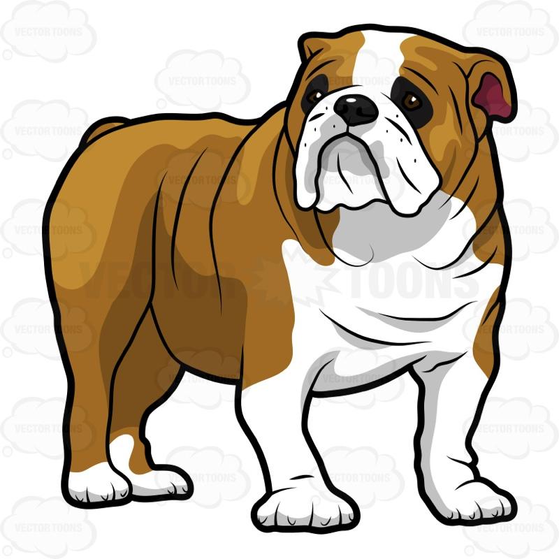 clipartlook. Bulldog clipart english bulldog