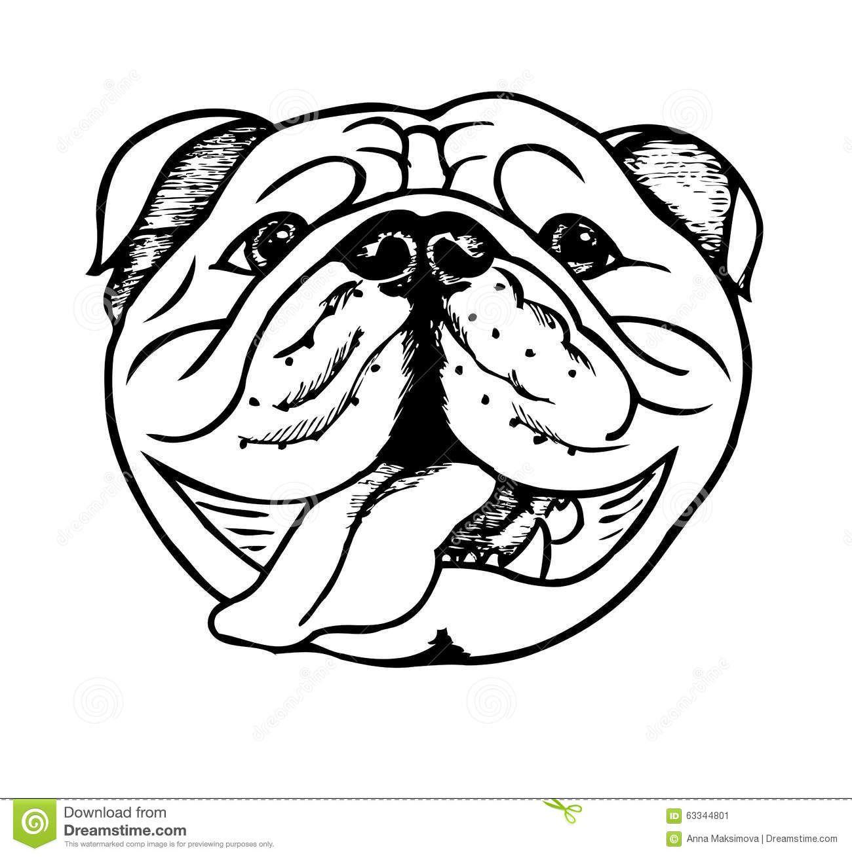Bulldog clipart english bulldog. Black white stock illustrations