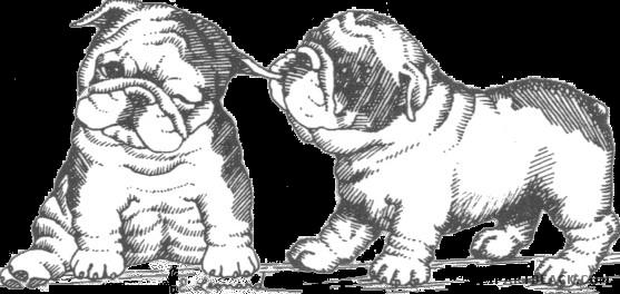 Bulldog clipart english bulldog. Clipartblack com animal free