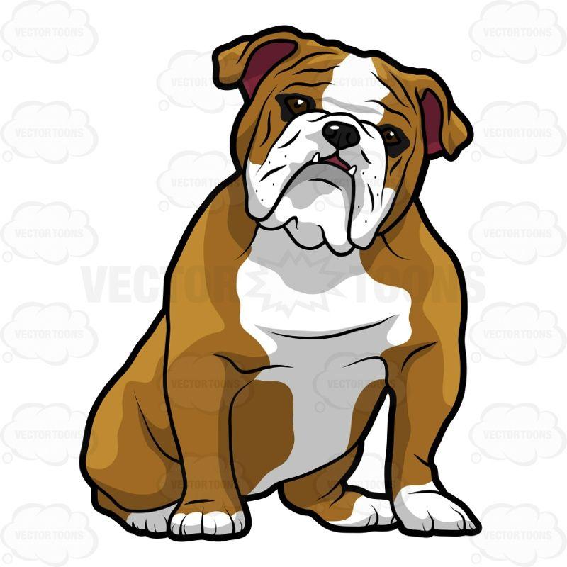 Sitting with its head. Bulldog clipart english bulldog