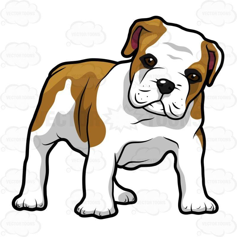 Bully dog free on. Bulldog clipart english bulldog