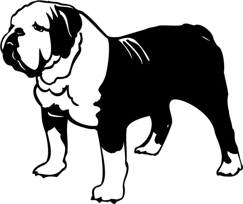 Bulldog clipart english bulldog.