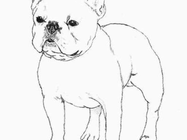 Bulldog clipart sketch. Free french download clip