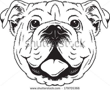 Black and white vector. Bulldog clipart sketch