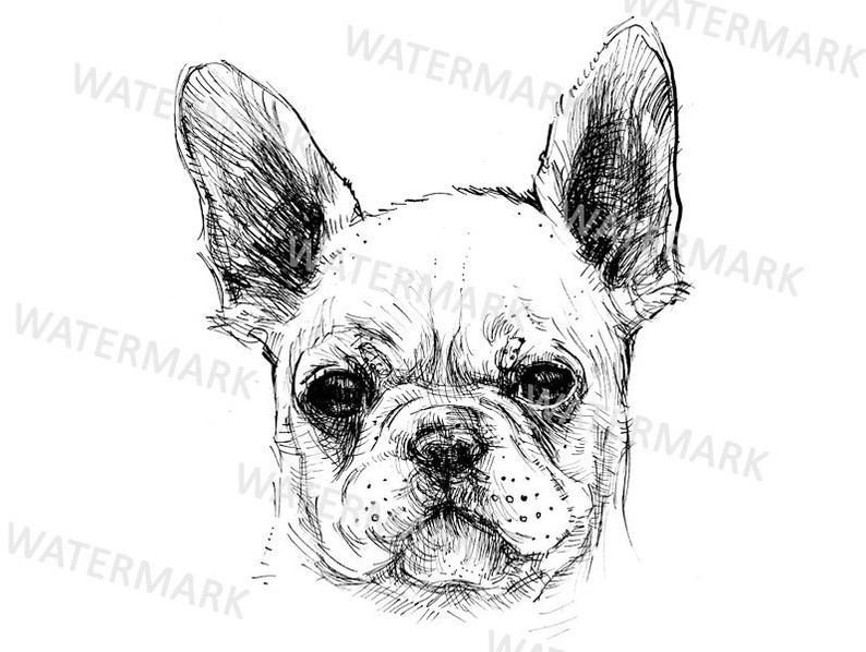 French hand drawn puppy. Bulldog clipart sketch