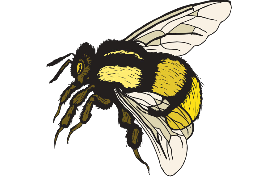 Bumblebee clipart bumble bee. Clip art free transparent