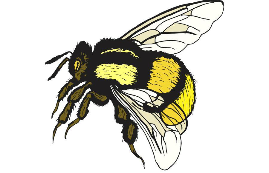 Vintage bee x free. Bumblebee clipart clip art