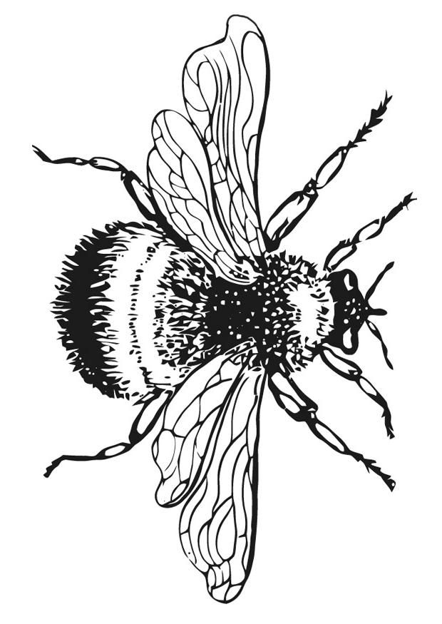 bumble bee coloring. Bumblebee clipart rustic