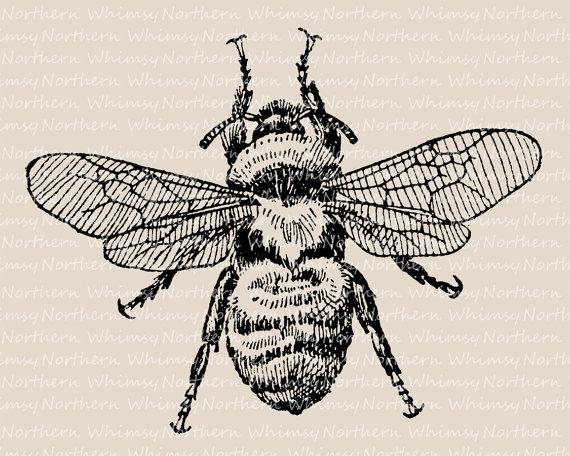 Bumblebee clipart vintage. Clip art bee illustration