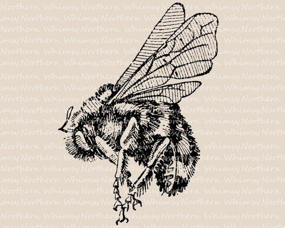 Bumblebee clipart vintage. Bee clip art illustration