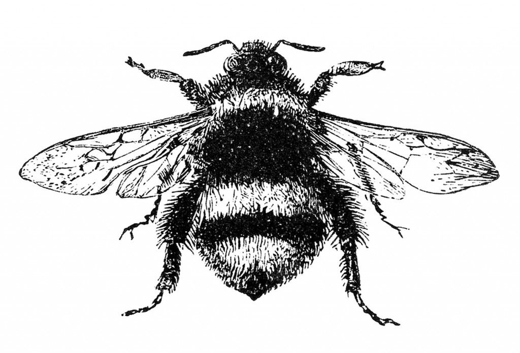 Printing bee images illustration. Bumblebee clipart vintage