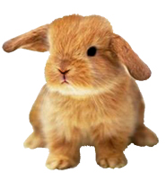 Bunnies clipart. Funny easter bunny small