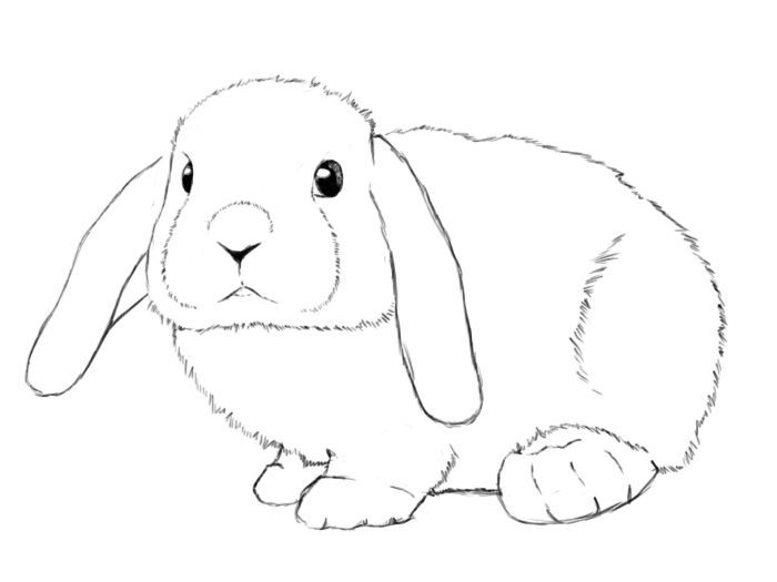 Clipart bunny mini lop. Bunnies critters rabbit drawing