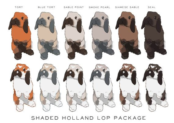 Clip art shaded color. Clipart bunny holland lop