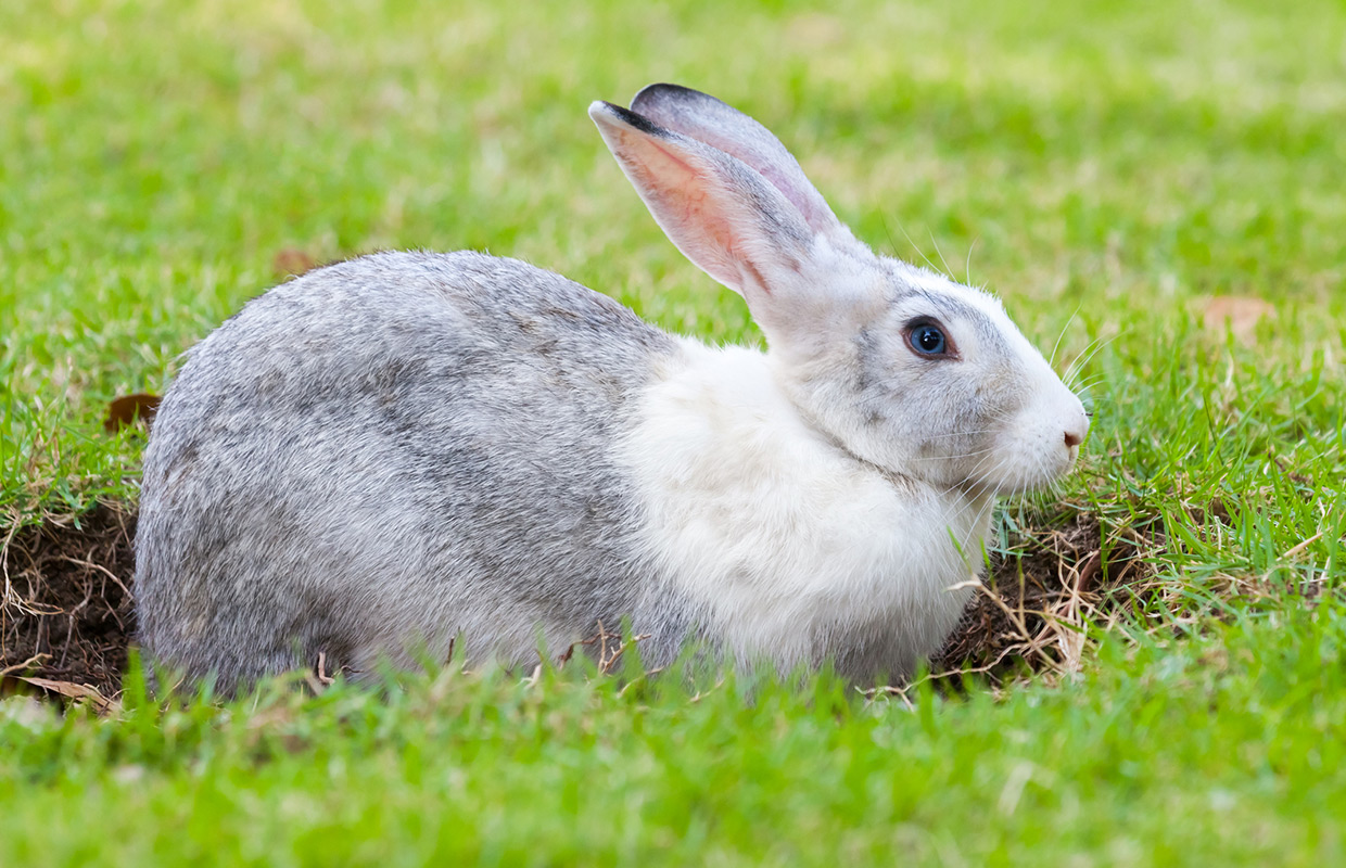 Bunny clipart home. Police find nearly bunnies